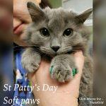 Soft-Paws-web.jpg